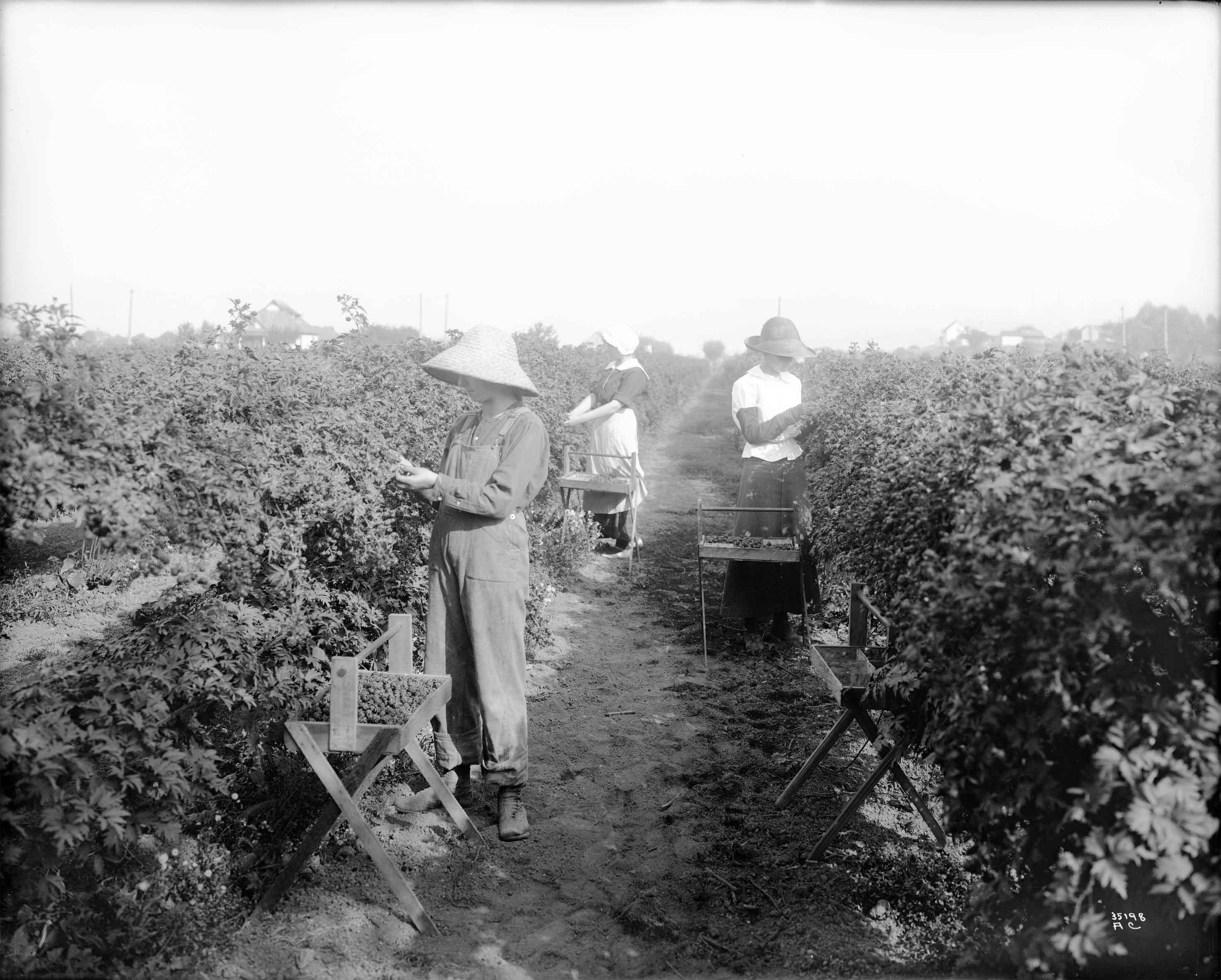 Blackberry Pickers