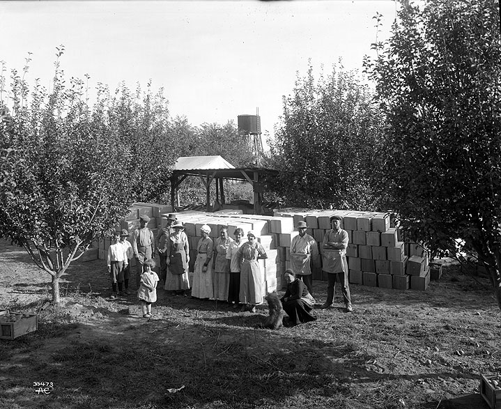Packing House and Crew, Curtis Orchard, Yakima Valley