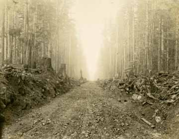 [logging railroad track near Lake Crescent]