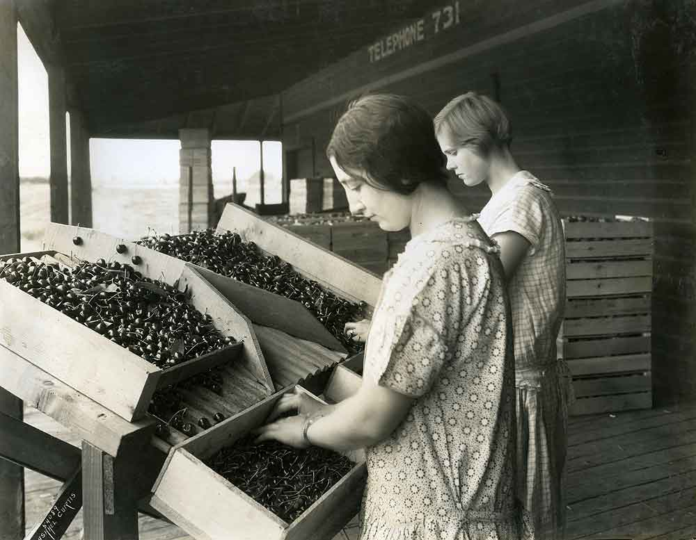 Two Women Packing Cherries.