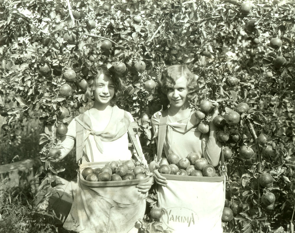 [Young apple pickers]