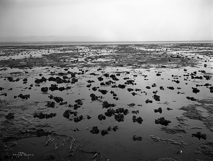 [View of Oyster Beds, Grays Harbor County]