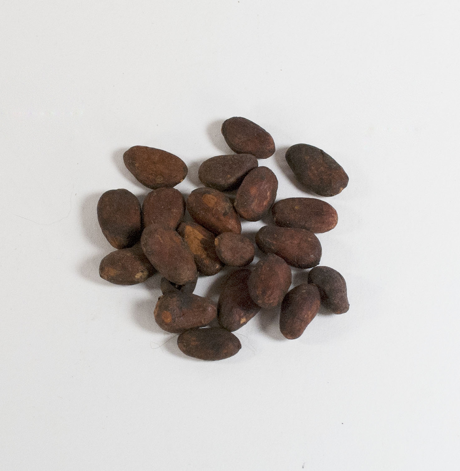 [group of cacao beans]