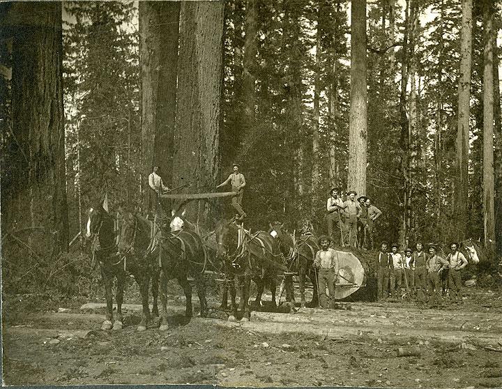 [Loggers at Logging Site, Puget Sound]