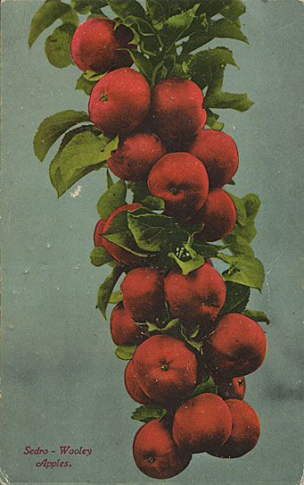 Apples in Skagit County, Wash