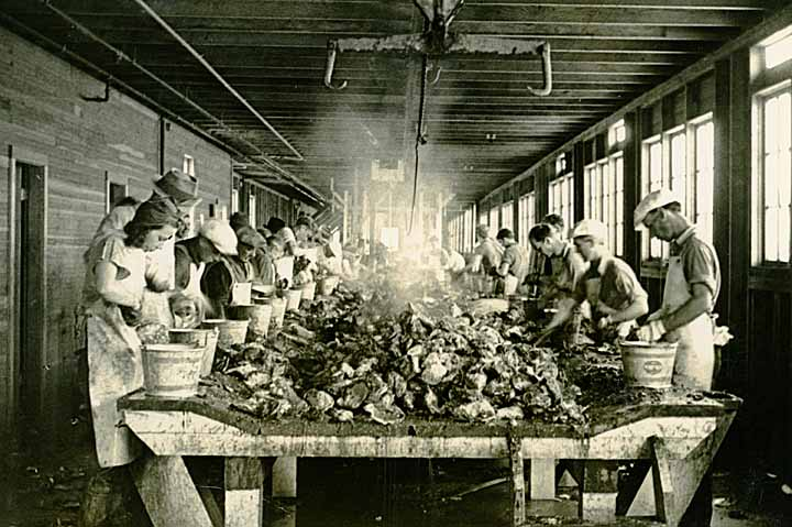 [schucking oysters at the Oysterville Co-operative Canning Co. at Nahcotta, WA]