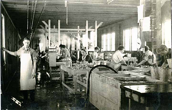 [washing oysters at the Oysterville Co-operative Canning Co. at Nahcotta, WA]