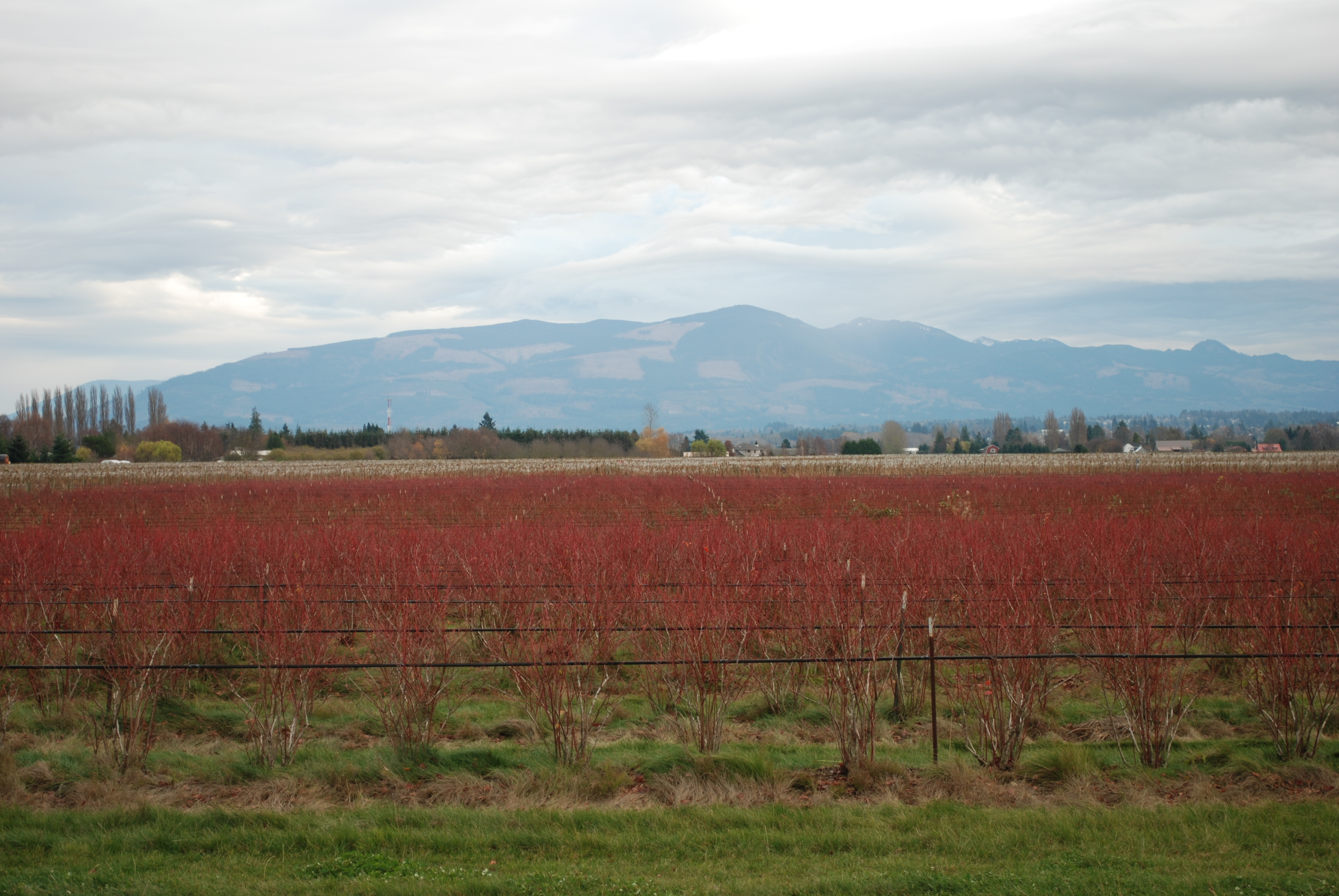 Skagit Valley, WA