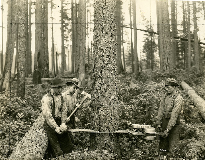 [Felling a Tree with a Wolf Saw at Maine Logging Camp, Hood Canal]