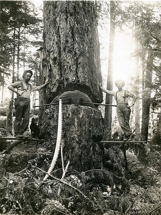 [Loggers Standing on Spring Board, Western Washington]