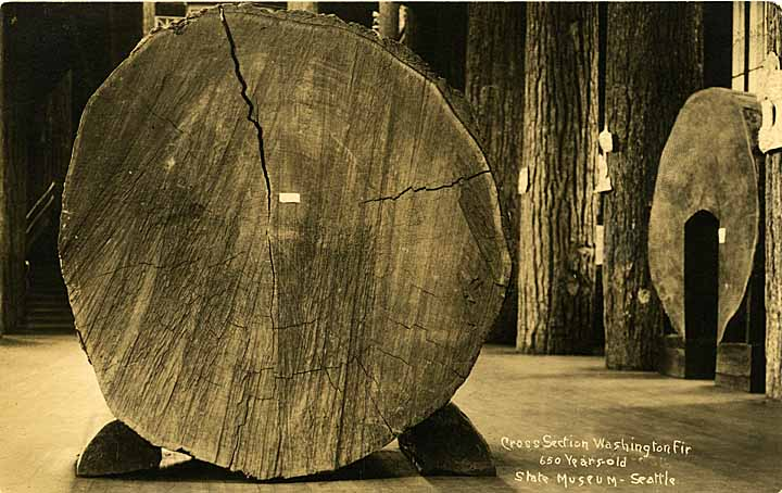 Cross Section Washington Fir, 650 years old, State Museum - Seattle