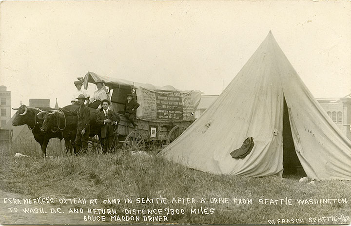 [Ezra Meeker's Ox Team at Camp in Seattle, WA in 1908]