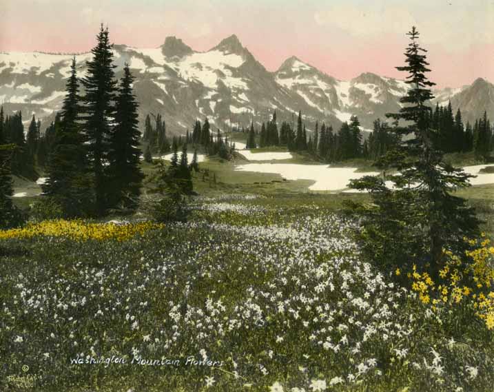 Washington Mountain Flowers
