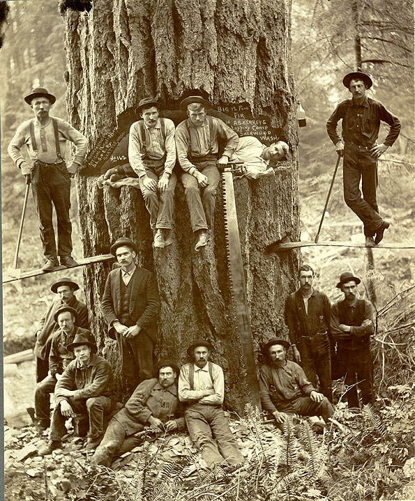 Big 12 Foot Fir in A.S. Kerry's Logging Camp  Sherwood Wash.