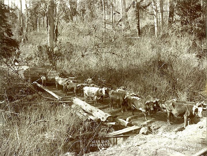 Logging Scene in Washington near Lake McMurray