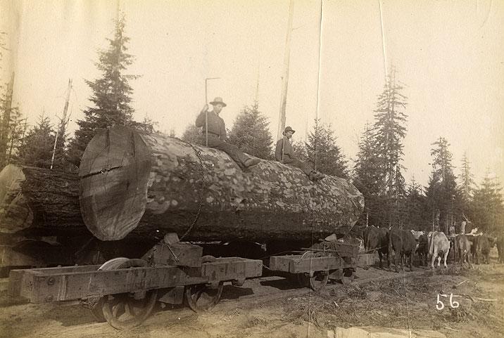 Logging cars and tram